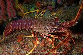 crayfish water